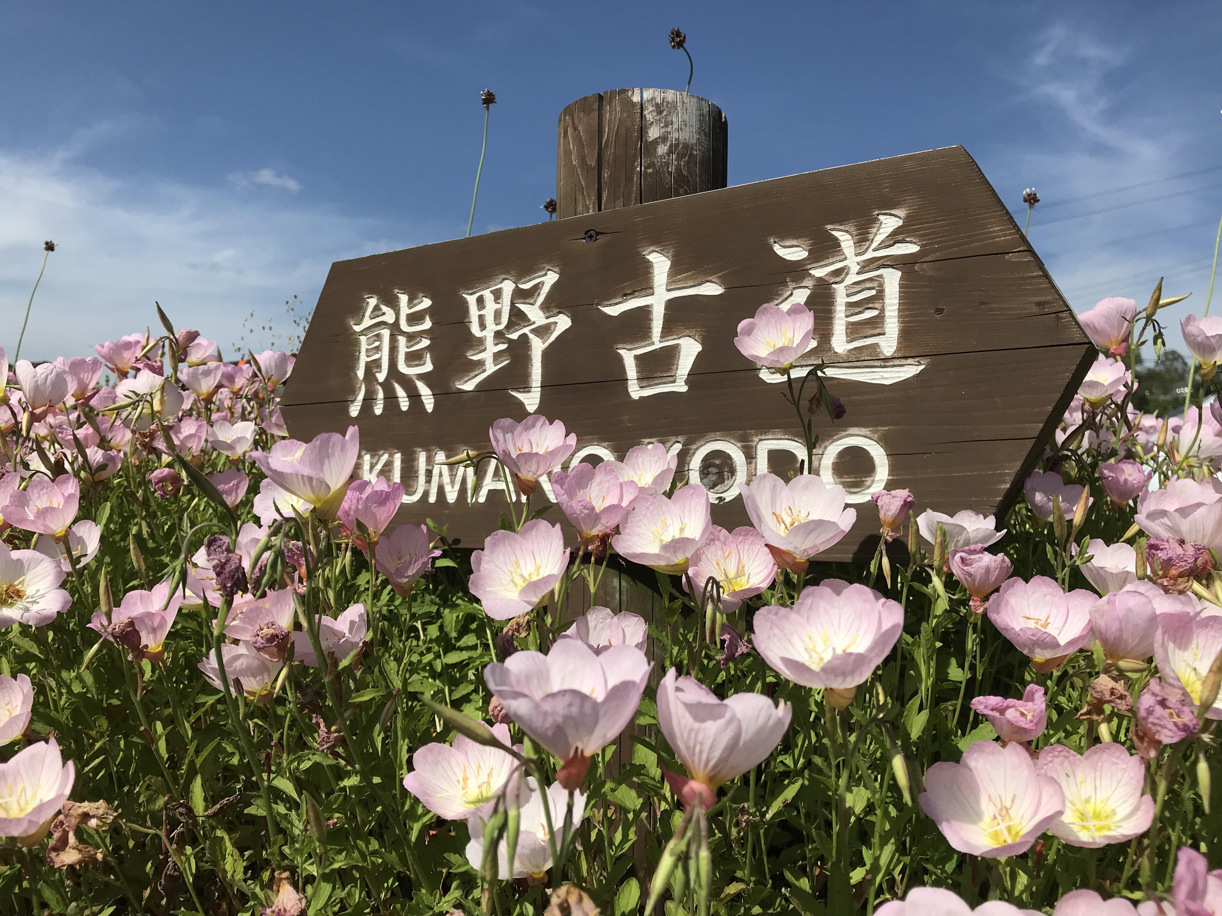 1人旅じゃないの?!京都~熊野360km歩き旅